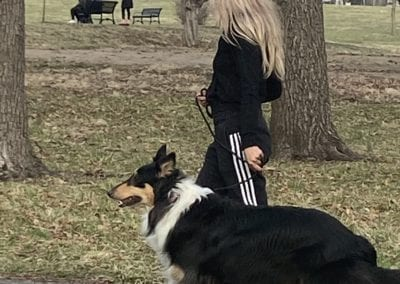 Dog-Obedience-2